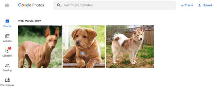 download photos to phone from computer with google photos